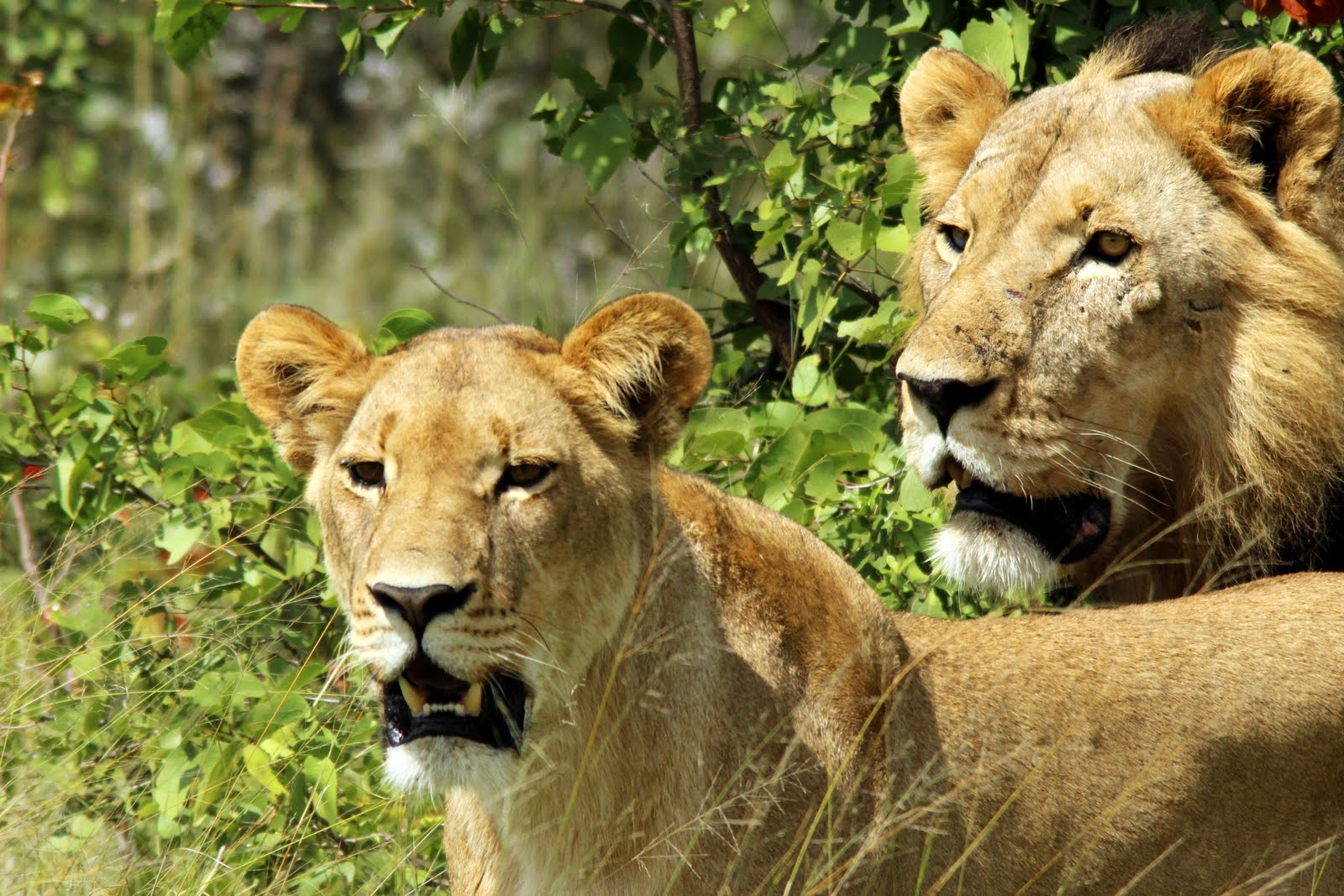 Getting to Akagera National Park
