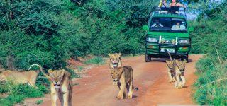 3 Days Akagera With Walk Line