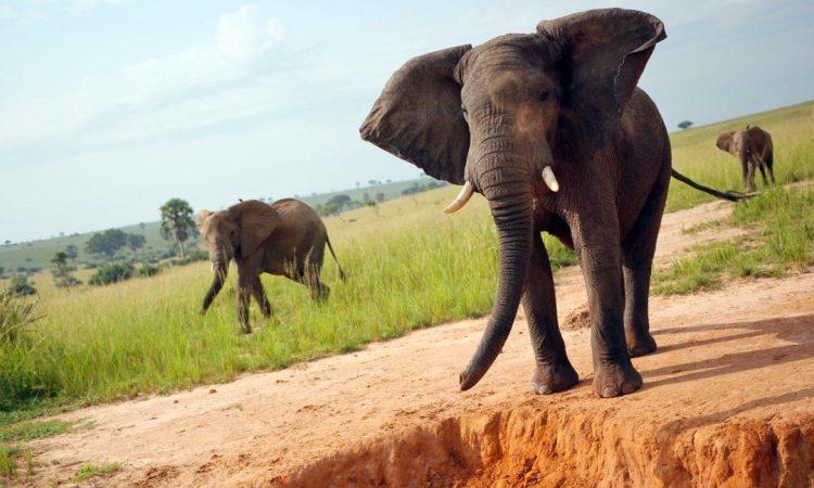 Wildlife Safari in Akagera National Park