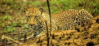 5 days Nyungwe and Akagera Safari