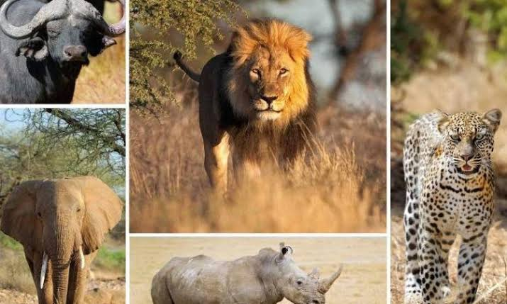 Big 5 in Akagera National Park