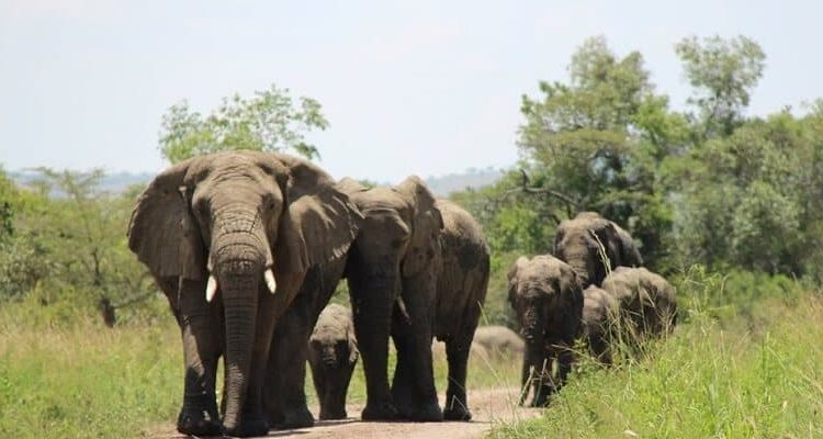 History of Akagera National Park