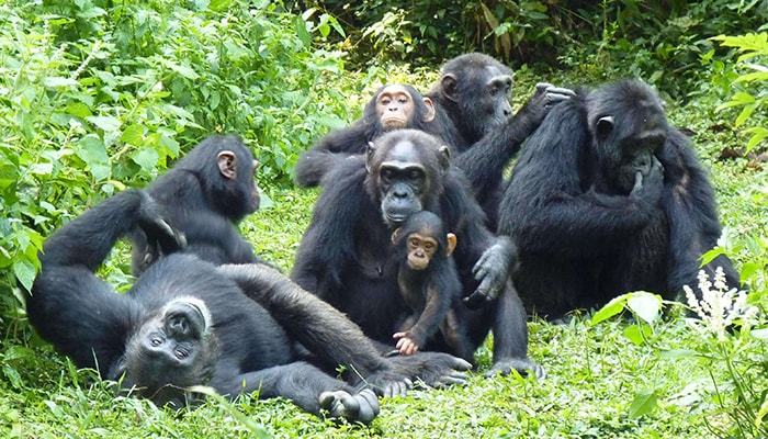 Kibale National Park Safari 2021