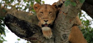 5 Days Queen Elizabeth Wildlife Safari