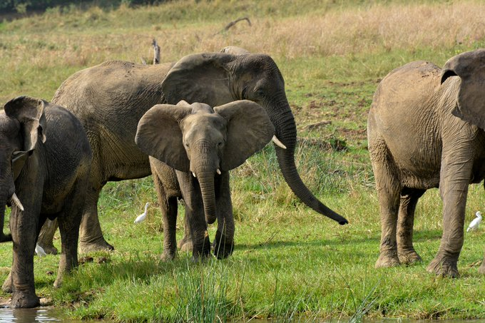 5 Days Queen Elizabeth Wildlife Safari