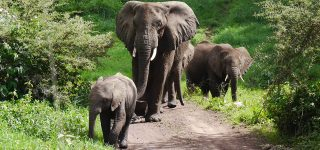 8 Days Akagera and Queen Elizabeth Wildlife Safari