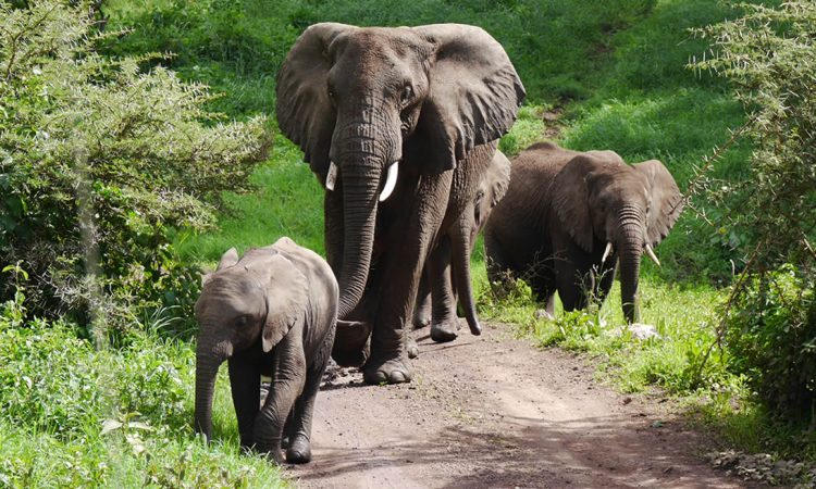 8 Days Akagera and Queen Elizabeth Wildlife Safari