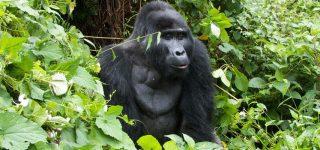 3 Days Bwindi Fly-In Gorilla Safari