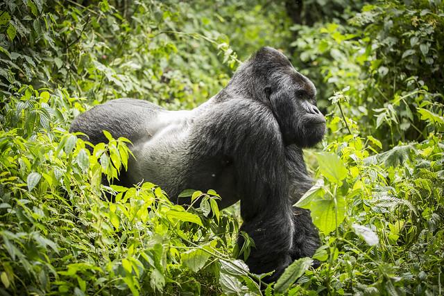 Travel Guide For Rwanda During Covid-19