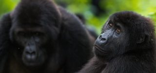 6 Days Virunga National Park & Tchegera Island